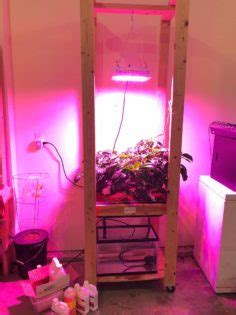 hydroponic bell peppers   garage nosoilsolutions