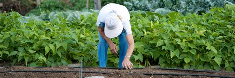 Garden Of Got Questions Got Questions About Gardening In Maine Ask Our Experts