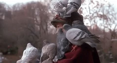 home alone 2 bird gif find on giphy