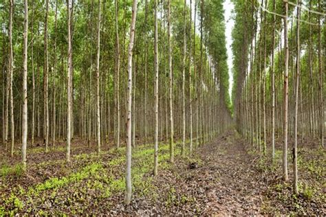 Define Tree defining forest could improve redd monitoring in