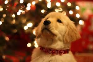 Christmas Dog Collars Tumblr » Ideas Home Design