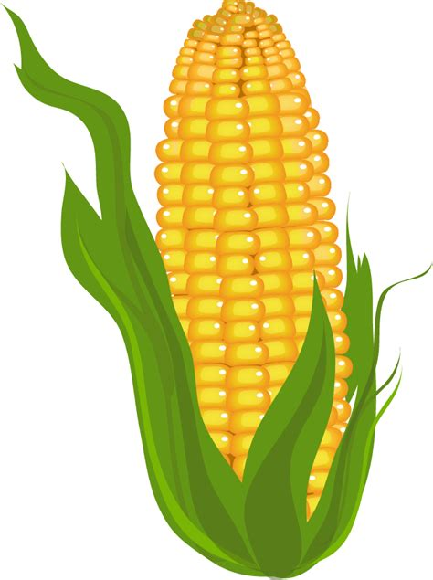 free image clipart corn clip free free clipart images 2 clipartix