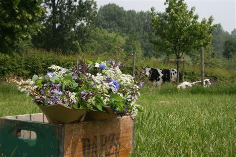 bloemen uit latijns amerika waar vind je biologische bloemen van de bioboerderij