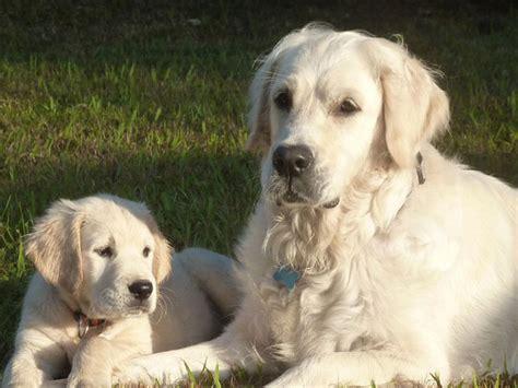 perros e hijos de 6071135443 fotos de perros con sus cachorros soyactitud