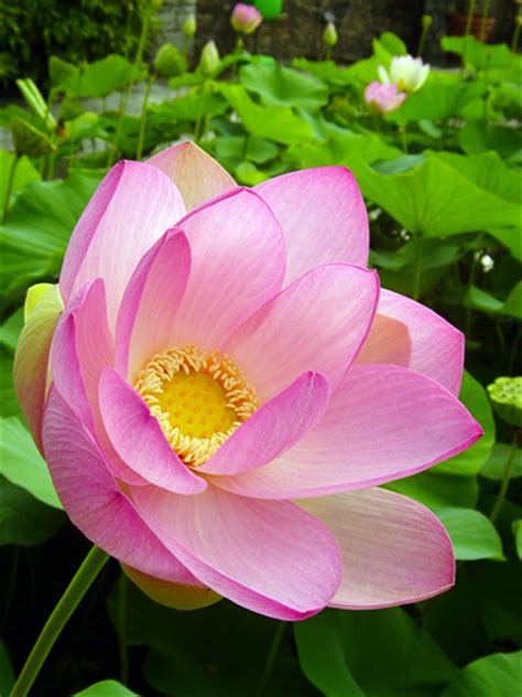 foto dei fiori pi 249 belli america s best lifechangers