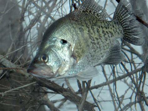 wake     cold weather crappie fishing  alabama