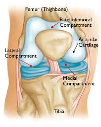 Compartment front part of knee between the kneecap and thigh bone