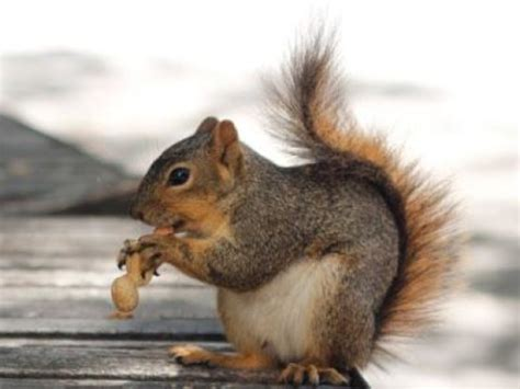 squirrels use chunking to organize their favorite nuts