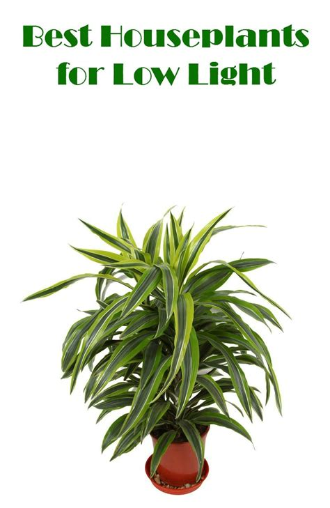 low light plants best houseplants for low light foodie