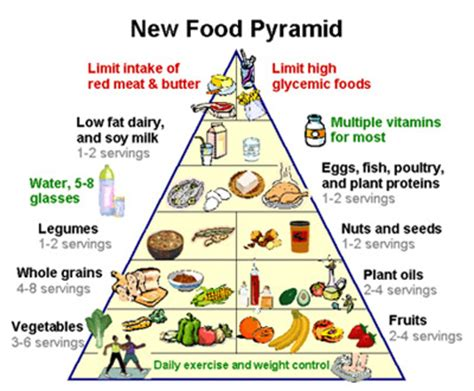 the new food pyramid in detail loseweightgroup.com