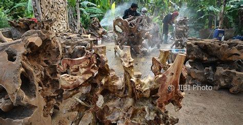 Meja Akar Mahoni foto kerajinan rembang akar pohon jadi furnitur indah