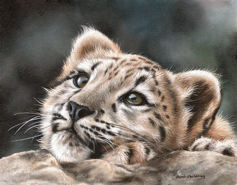 Leopard Home Decor by Snow Leopard Cub Painting By Sarah Stribbling