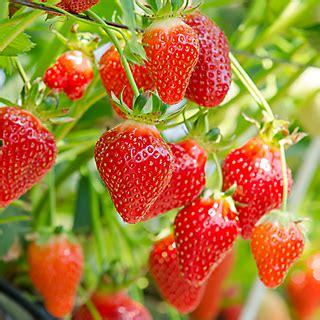 safer® brand garden fungicide rtu 32oz