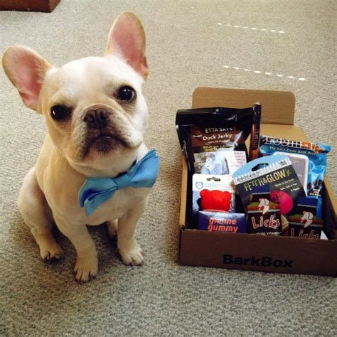barkbox for puppies the best gifts for the holidays barkbox