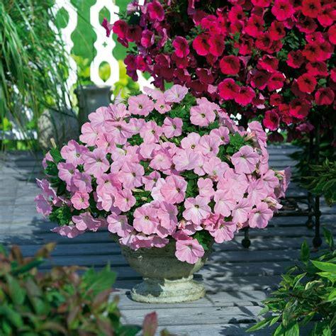 Bilder Gartengestaltung Ideen 4247 9 besten rhododendron farbenpracht f 252 r den heimischen