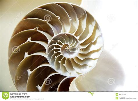 Hiltons Time Cut In Half by Seashell Cut Open Stock Image Image Of Nature Snail