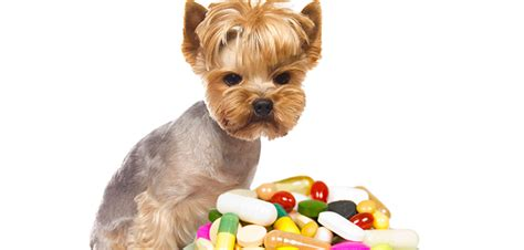 benadryl for dogs anxiety can you give a benadryl that s on other medication