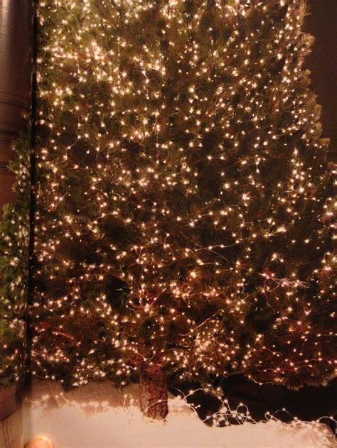 starry string lights restoration hardware s