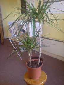Foliage House Plant Identification - facts about low light house plants plants in nanopics