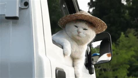 cat gif ignore it gif find on giphy