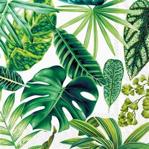 tropical plant leaves 17 best images about tropical theme supplies