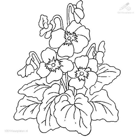 free coloring pages of flowers and plants