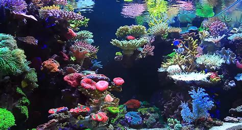 Aquascape Reef by Real Reef Aquascaping With Youngil Moon