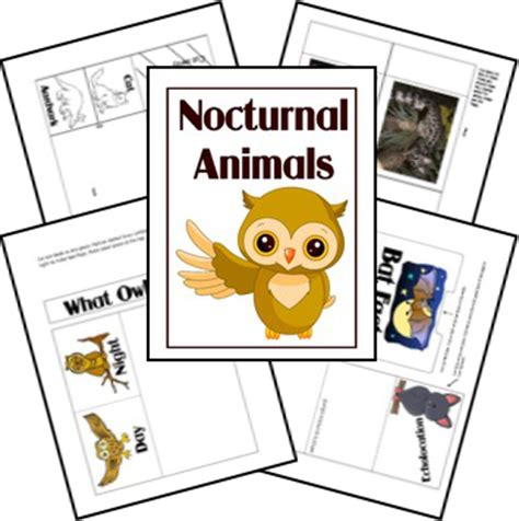printable nocturnal animal book free nocturnal animals unit study
