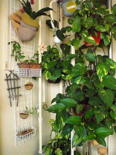 plants to grow indoors how to grow money plant indoors indoor gardening pinterest