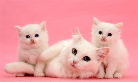 Buat Kucing Cara Mudah Nak Buat Kucing Datang Bila Namanya Di Panggil