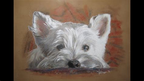 speed painting westie  acrylics  colored pencil youtube