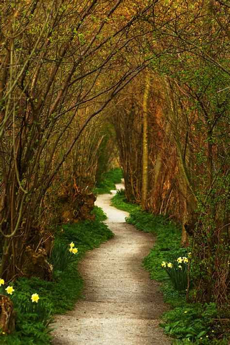 the winding path a photo from zuid holland south trekearth