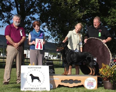 american rottweiler club top dogs cammcastle