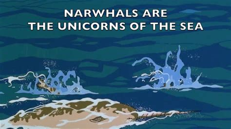 narah and the unicorn the original narwhal story books the last narwhal unicorn of the sea