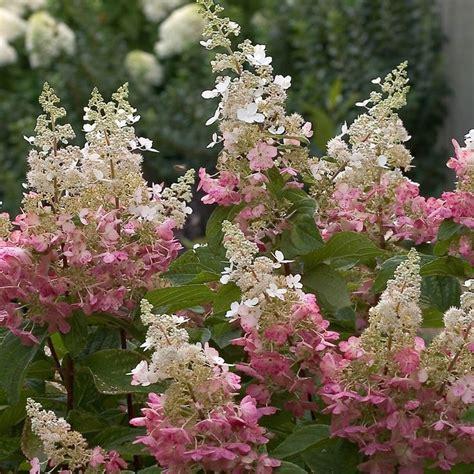 flower gardening tips 123 best pink flower garden images on flowers