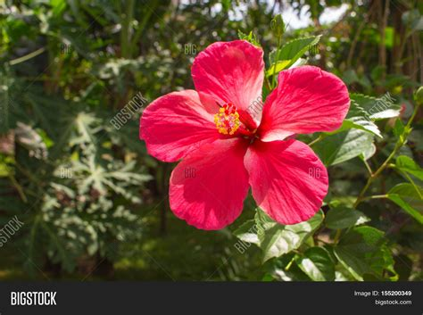 pink flower on image photo free trial bigstock