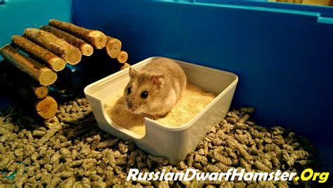 sanding a bathtub how to create a sand bath for dwarf hamsters 5 steps