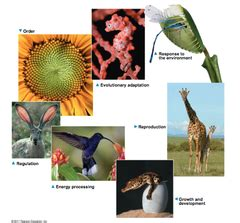 themes of biology quizlet test 1 flashcards quizlet