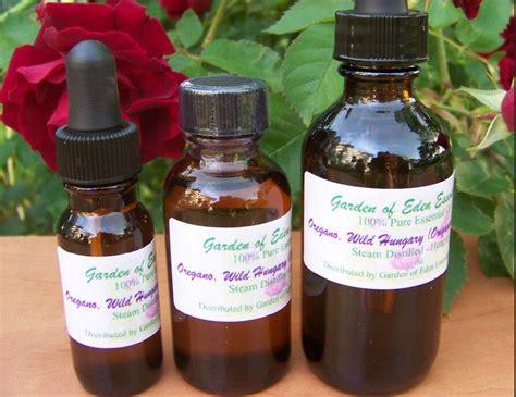 Minyak Ylang Ylang 14 amazing oregano manfaat minyak essential dan kegunaan