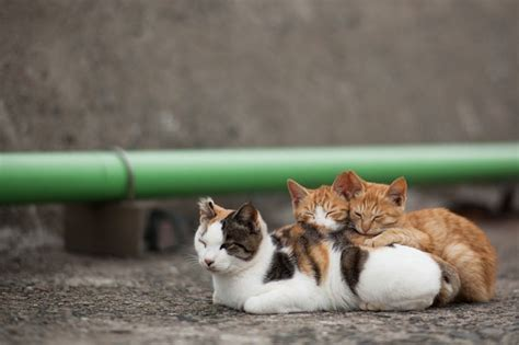 cat island 50 amazing photos from cat heaven island in japan