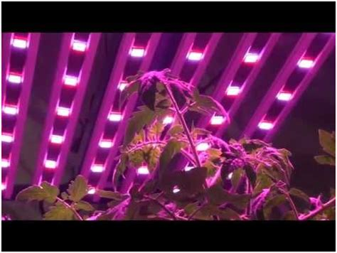 horticultural led grow lights growing crops with led growing lights