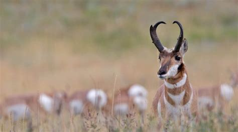 wyoming diy archery pronghorn hunt donation  charity fundraisers