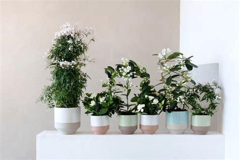 Plante Purificatrice D Air by Ext 233 Rieurs Design Le Magazine Du Nouvel De Vivre Outdoor