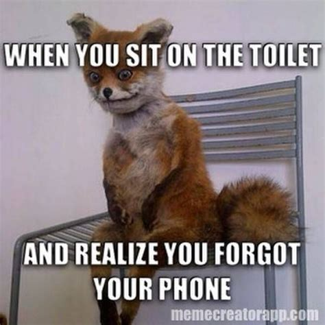 Top Ten Funny Memes - 43 best images about fox on pinterest bad taxidermy the