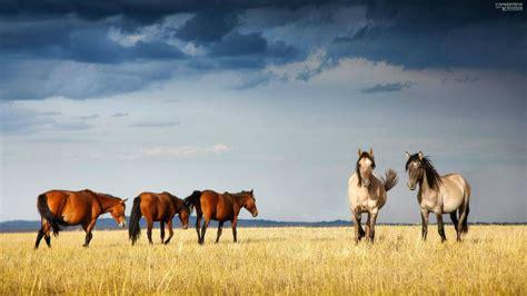 wallpaper hd 1920x1080 horses horses hd wallpapers horse desktop wallpapers 1080p hd