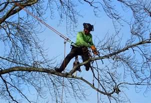 Tree Pruning Tree Pruning Wilson Tree Care