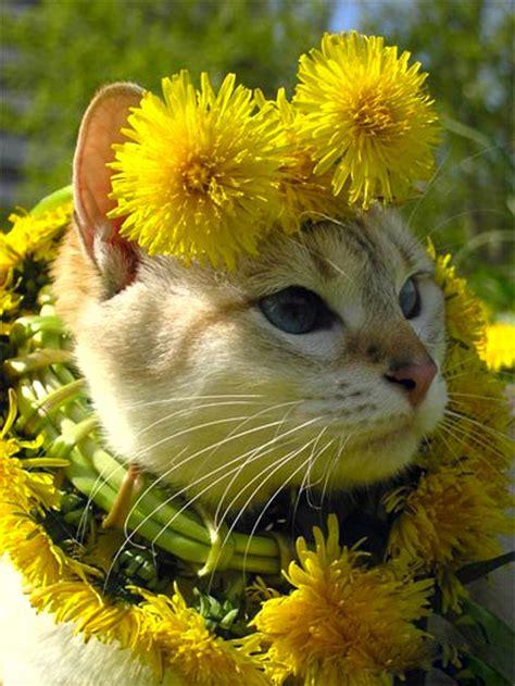 cats love flowers ego alteregocom