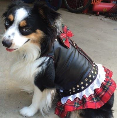 Motorcycle Apparel For Dogs by Red Plaid Biker Dog Dress Motorcycle Dog Clothes At
