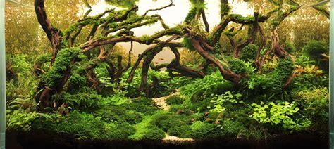 aquascape layout contest iwaqu toko ikan hias aquascape ikan hias aquarium dan