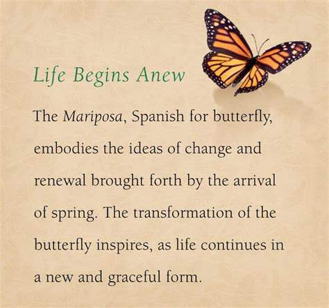 what do butterfly tattoos mean the meaning the mariposa inspiration many